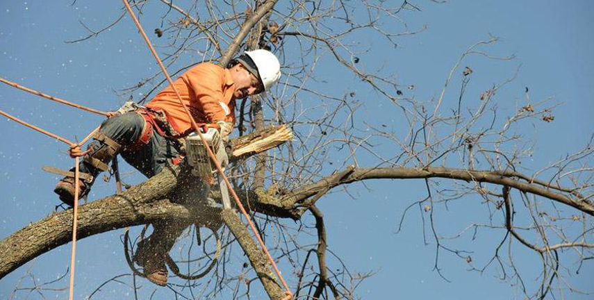 Tree Shaping Vale Park, Stump Removal Walkerville, Tree Pruning Hectorville, Stump Grinding Newton, Tree Trimming Gippsland